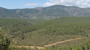 monte-forestal